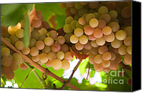Sunny Vineyard Photo Canvas Prints - Harvest Time. Sunny Grapes II Canvas Print by Jenny Rainbow
