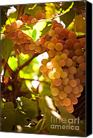 Berry Canvas Prints - Harvest Time. Sunny Grapes III Canvas Print by Jenny Rainbow