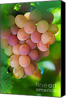 Sunny Vineyard Photo Canvas Prints - Harvest Time. Sunny Grapes Canvas Print by Jenny Rainbow