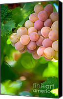 Sunny Vineyard Photo Canvas Prints - Harvest Time. Sunny Grapes VIII Canvas Print by Jenny Rainbow