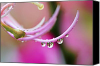 Raining Canvas Prints - Hawaiin Rain Drops Canvas Print by Marilyn Hunt