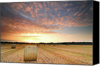 Growth Photo Canvas Prints - Hay Bale Field At Sunrise Canvas Print by Stu Meech