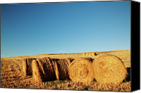 Tuscany Canvas Prints - Hay Bales Canvas Print by Matteo Colombo