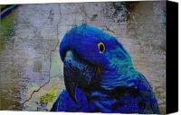 Parrots Canvas Prints - He Just Cracks Me Up Canvas Print by Jan Amiss Photography