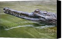 Animal Greeting Card Canvas Prints - Head Above Water Canvas Print by Dan Holm