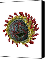 Microbiology Canvas Prints - Hepatitis C Virus, Molecular Model Canvas Print by Ramon Andrade 3dciencia