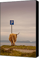 Cow Canvas Prints - Her Favourite Pick-nick Spot In The Highlands Canvas Print by Dorit Fuhg