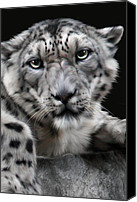 Animals Digital Art Canvas Prints - Hercules Canvas Print by Big Cat Rescue