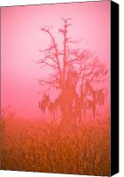 Florida Nature Photography Canvas Prints - Here I Stand Canvas Print by Carolyn Marshall