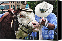 Bulls Canvas Prints - Hereford Bull with Akubra Hat in Hyde Park Canvas Print by Kaye Menner