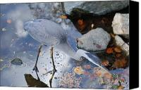 Art Appraisal Canvas Prints - Heron Fishing Photograph Canvas Print by Don  Wright