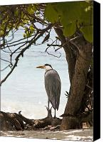 Waterfowl Canvas Prints - Heron Canvas Print by Jane Rix