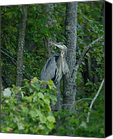 Wildlife Pyrography Canvas Prints - Heron on a limb Canvas Print by Shirley Tinkham