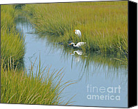 East Coast Canvas Prints - Heron Reflections Canvas Print by Cindy Lee Longhini