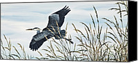 Heron  By James Williamson Painting Canvas Prints - Herons Flight Canvas Print by James Williamson