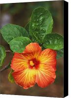 Outdoor Still Life Canvas Prints - Hibiscus Canvas Print by Allan Seiden - Printscapes
