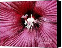 Ribs Canvas Prints - Hibiscus Close Up Two Details Canvas Print by Marsha Heiken