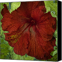 Barbara Middleton Canvas Prints - Hibiscus Plus Fern Canvas Print by Barbara Middleton