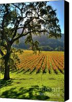 Napa Valley Canvas Prints - Hidden Valley 4b Canvas Print by Mars Lasar