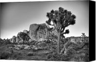 Joshua Trees Canvas Prints - Hidden Valley Rock Canvas Print by Peter Tellone