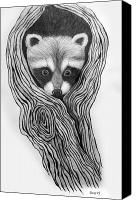 Raccoon Drawings Canvas Prints - Hiding out Canvas Print by Nick Gustafson