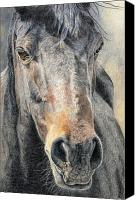Horse Portrait  Canvas Prints - High Desert  Canvas Print by Joanne Stevens