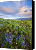 Lupine Canvas Prints - High Desert Spring Canvas Print by Mike  Dawson