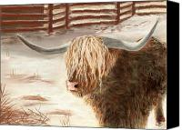 Landscapes Pastels Canvas Prints - Highland Bull Canvas Print by Anastasiya Malakhova