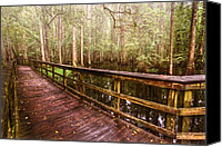 Beach Photograph Canvas Prints - Highlands Hammock Canvas Print by Debra and Dave Vanderlaan