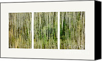Greenish Canvas Prints - Hillside Forest Canvas Print by Priska Wettstein