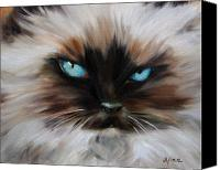 Cats Pastels Canvas Prints - Himalayan Canvas Print by Mary Sparrow Smith