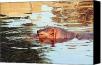 Hippopotamus Canvas Prints - Hippo Scope Canvas Print by Jan Amiss Photography