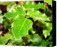 Northwest Art Canvas Prints - Holly Leaves Canvas Print by Cathie Tyler