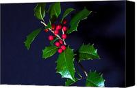 Red Berries Canvas Prints - Holly Canvas Print by Robert Pilkington