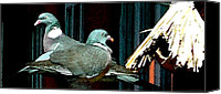 Hera Mixed Media Canvas Prints - Holy Pigeon Couple Mates for ever enjoy the Garden peace Canvas Print by Colette Hera  Guggenheim
