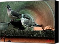Hera Mixed Media Canvas Prints - Holy Pigeons Silence in the Garden  Canvas Print by Colette Hera  Guggenheim