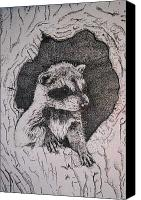 Raccoon Drawings Canvas Prints - Home Canvas Print by Debra Sandstrom