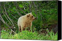 Kodiak Canvas Prints - Home Sweet Home Canvas Print by Dennis Blum