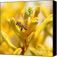 Kangaroo Canvas Prints - Honey Bee in Flight Canvas Print by Kenny Bosak