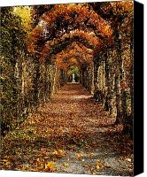 Leaf Pile Photo Canvas Prints - Hornbeam Alles, Birr Castle, Co Offaly Canvas Print by The Irish Image Collection 