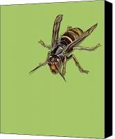 Insects Painting Canvas Prints - Hornet Canvas Print by Jude Labuszewski