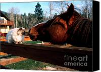 Buddies Canvas Prints - Horse and Cat Nuzzle Canvas Print by Thomas R Fletcher