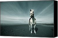 Horse Standing Canvas Prints - Horse At Irvine Beach Canvas Print by Mikeimages