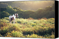 Horse Standing Canvas Prints - Horse At Sunrise Canvas Print by Philipp Klinger