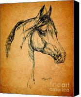 Arabian Horse Drawings Canvas Prints - Horse Drawing Canvas Print by Angel  Tarantella
