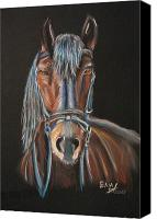 Photographs Pastels Canvas Prints - Horse Canvas Print by Eli Marinova