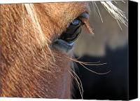 Equine Canvas Prints - Horse Eye Canvas Print by Cassie Peters