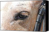 Bridle Canvas Prints - Horse Eye Canvas Print by Jennifer Lyon