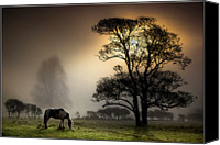 Grazing Canvas Prints - Horse Grazing In Field Canvas Print by Land and Light