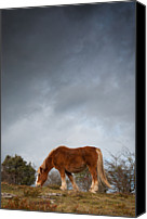 Horse Standing Canvas Prints - Horse Grazing On Route Canvas Print by Eneko Garcia Ureta - Fotografía